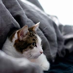 dinge die jede wohnung mit katze haben sollte tierisch With balkon teppich mit wenn katzen an tapeten kratzen