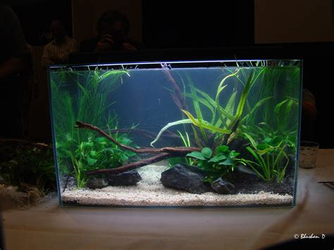 decor de fond aquarium aquarium on design aquascaping and planted