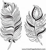 Feathers Coloring Pages Adult Adults Print sketch template