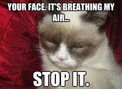 Grumpy Meme Face - grumpy cat meme6 some pets