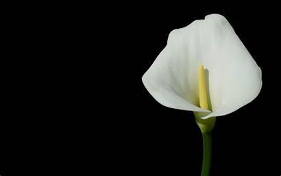 Flower Weneedfun