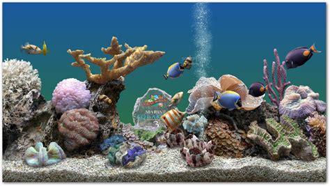 all marine all aquarium marine aquarium
