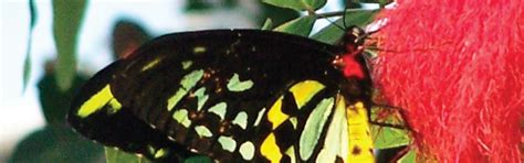 85876 Westminster Butterfly Pavilion Coupon by Butterfly Pavilion Coupons In Denver Boulder Chinook Book