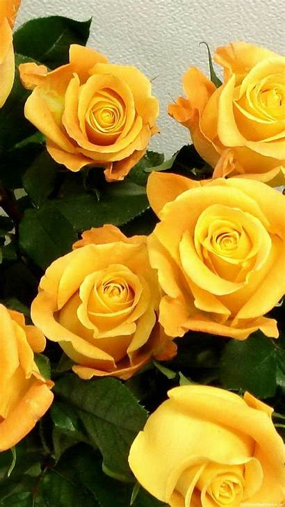 Yellow Iphone Wallpapers Flowers Phone Rose Flower