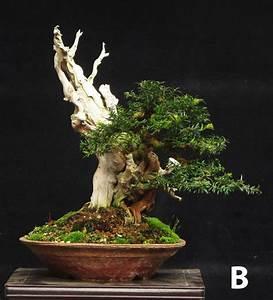 Bonsai Baum Garten : 10759 besten bonsai bilder auf pinterest bonsai ~ Lizthompson.info Haus und Dekorationen