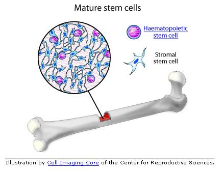 medical pictures info bone cell