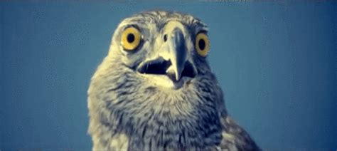 Mother Of God Meme Gif - omg bird gifs find share on giphy