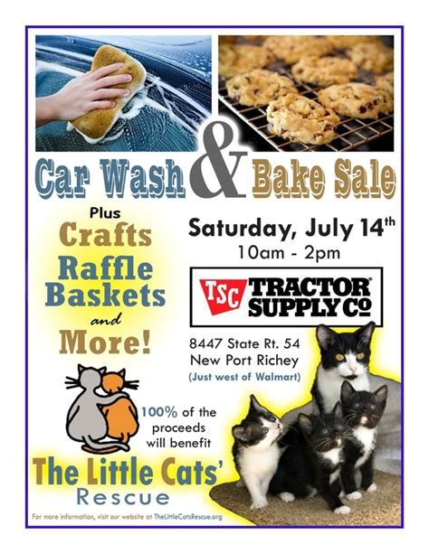 Car Wash New Richey Fl by Cats Rescue Is A Car Wash And Bake Sale New