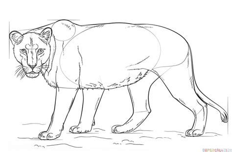 draw  lioness step  step drawing tutorials