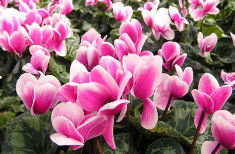 fiori da giardino perenni foto fiori invernali da esterno i nomi e le immagini foto ecoo