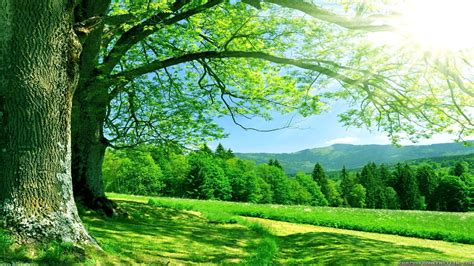 Nature Wallpapers High Resolution Download