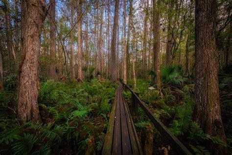 highlands hammock state park florida travel gems few about