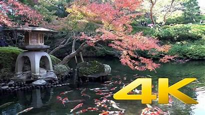 Koi Pond 4k Ultra Fish Japan Wallpapers