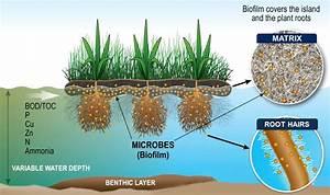 Vita Water Technologies