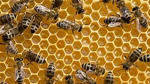 Small Business Leadership  Are You A Queen Bee Or A Worker