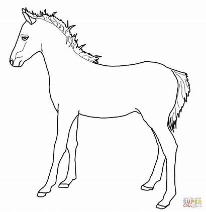 Pony Welsh Coloring Pages Printable Horses Cob