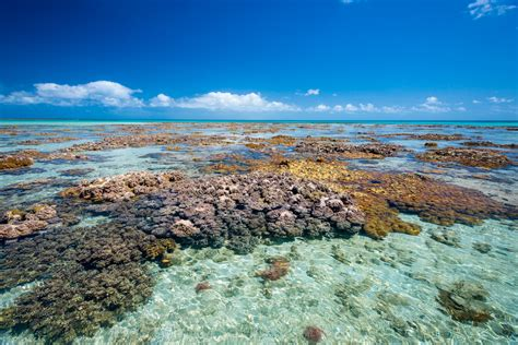 Ningaloo Reef versus the Great Barrier Reef - Without A Hitch | Without A Hitch