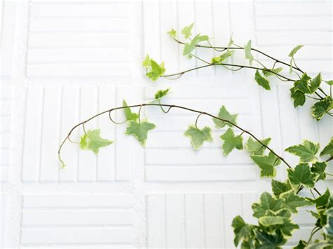 love wallpaper gambar gambar daun  alami   indah