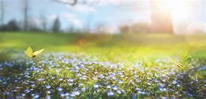 abstract nature spring Background; spring flower and ...