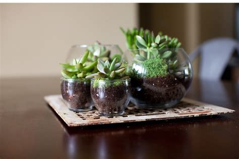 16 Inspirational Ideas How To Make A Perfect Terrarium On