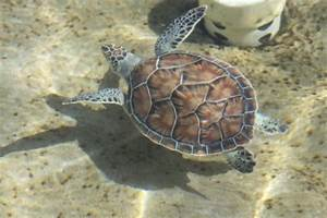 Mr. Turtle - Picture of Cayman Turtle Centre: Island ...
