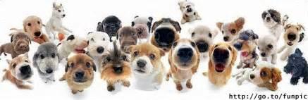 Résultat d'images pour gifs chiens