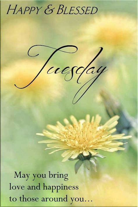 happy tuesday quotes  pinterest happy tuesday
