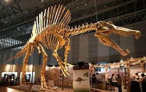 هيكل ديناصور مهرب من المغرب يباع في باريس ب400 مليون سنتيم ...