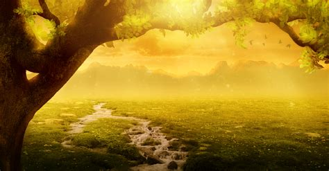 images background imagination landscape tree