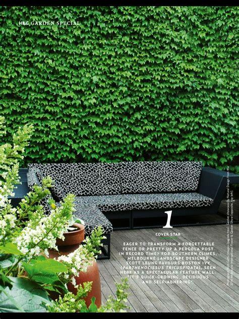 ivy wall ideas  pinterest