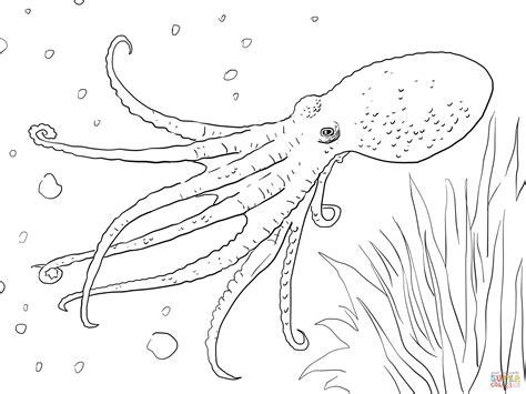 Octopus Kleurplaat by 301 Moved Permanently