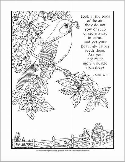 Coloring Birds Bird Printable Pages Air Flanders
