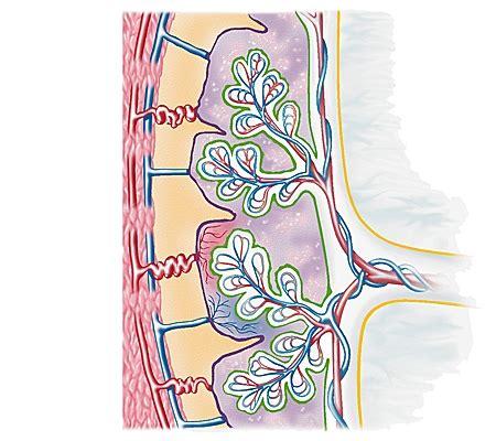 chambre intervilleuse encyclopédie larousse en ligne placenta