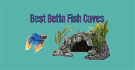 betta fish caves betta fish care