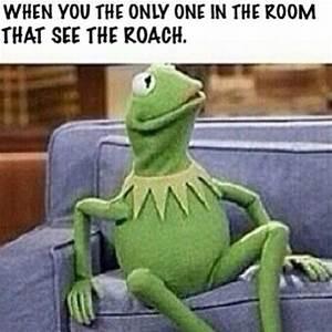 Top 20 Funniest Kermit The Frog Memes | Humor | Pinterest ...