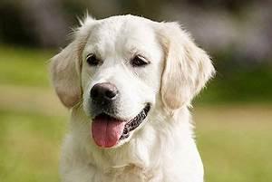 Pflegeleichte Haustiere Wohnung : haustier hund ~ Yasmunasinghe.com Haus und Dekorationen