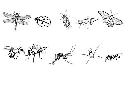 ausmalbild tiere insekten zum ausmalen kostenlos ausdrucken
