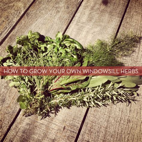windowsill herb garden how to grow your own windowsill herb garden 187 curbly diy design decor