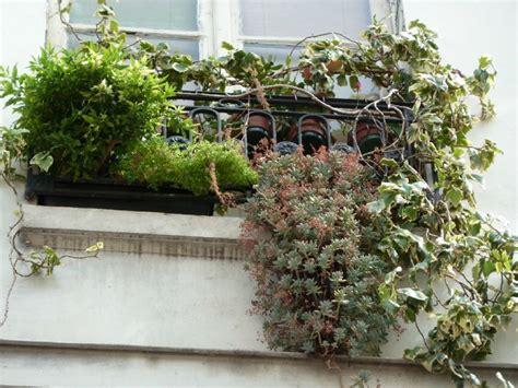 pommier d amour exterieur 28 images cultiv 233 plante int 233 rieur tout soins chiens chats