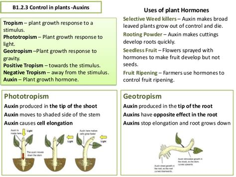 aqa gcse science biology  revision