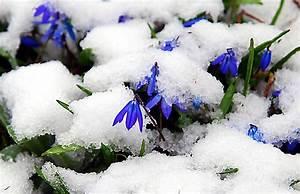 Aktuelle Blumen Im April : april april der wei nicht was er will mal regen mal schnee kostenlose bilder blumen ~ Markanthonyermac.com Haus und Dekorationen