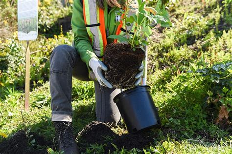Help Plant Forest Partnered With One Tree Planted