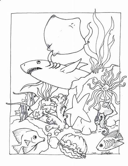 Realistic Coloring Pages Sea Animals Water Ocean