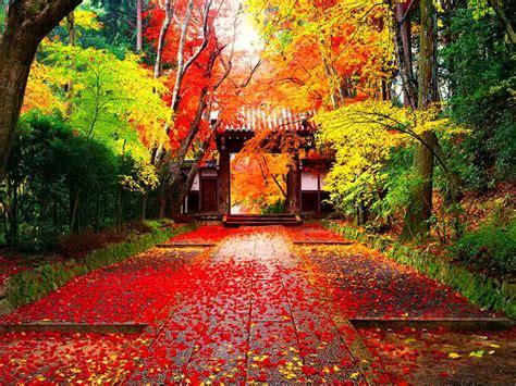 autumn  japan simfonia toamnei pentruvoi
