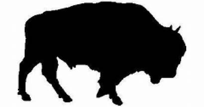 Bison Decals Sticker Decal Stickers Animal