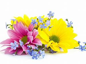 Pink, yellow and blue flowers on a white background   HD ...
