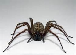 10 Creepy, Crazy Spider Facts | Animals Blog