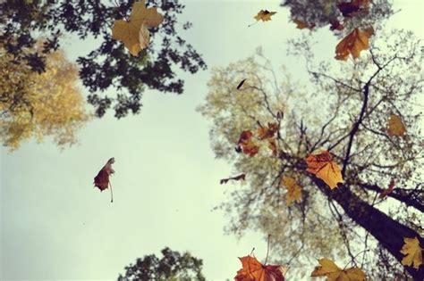 #angle #leaves #fall #autumn #photography | Autumn leaves ...