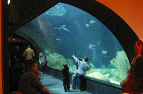 aquarium de cin 233 aqua wikip 233 dia