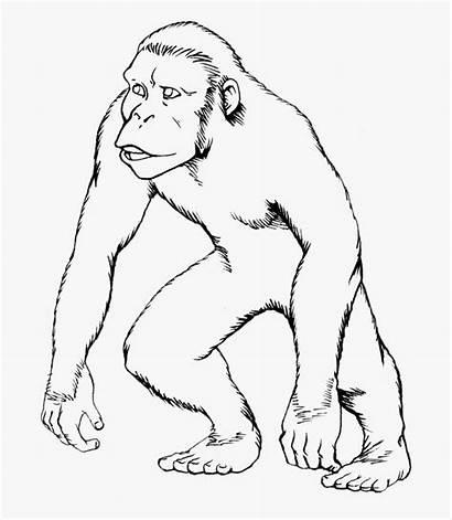 Drawing Ape Getdrawings Imagenes Cartoon Simio Dibujar